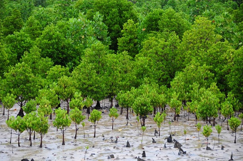 Sustaining mangrove conservation