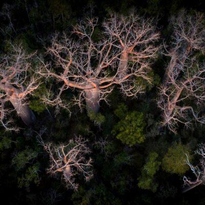 Les forêts précieuses de Madagascar
