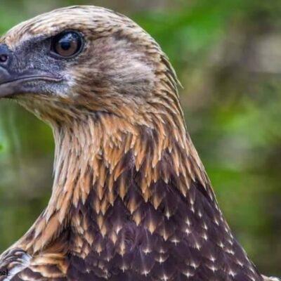 Ankoay : 来自马达加斯加的鹰渔民