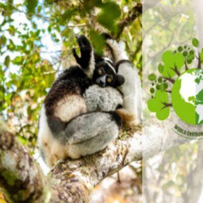 05 Juin : Journée mondiale de l'environnement